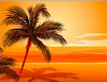 South Pacific Palm Trees image from http://rlv.zcache.com/palm_tree_beach_sunset_postcard-p239805205626939831z8iat_400.jpg