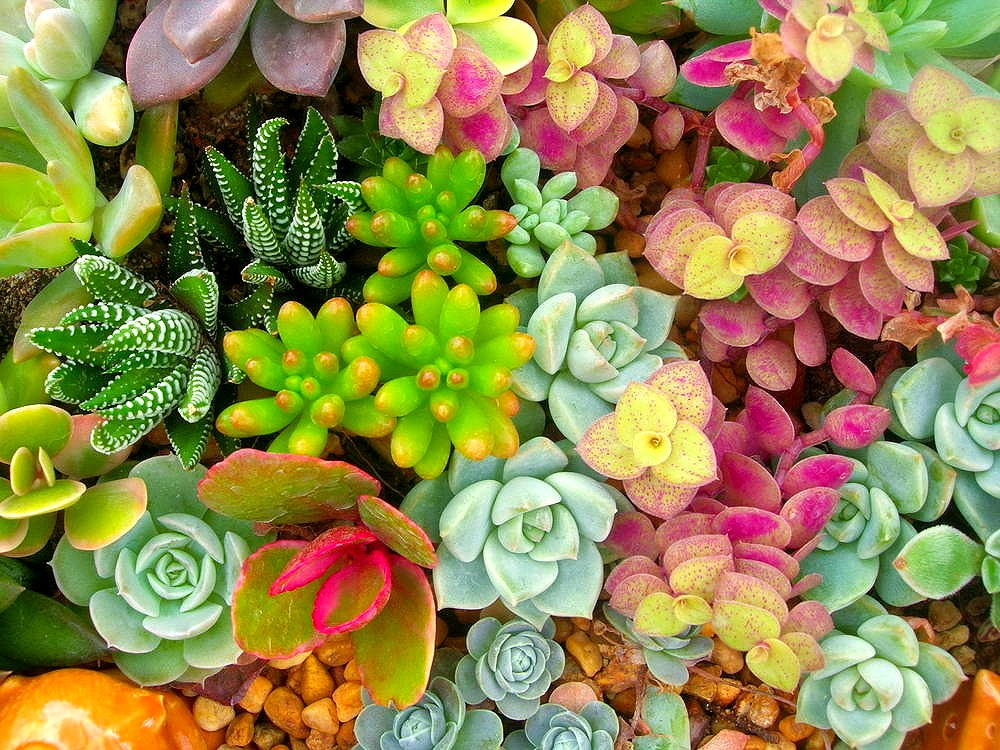 7 best sicculent plants for your home and garden from ahs.com https://www.ahs.com/home-matters/lawn-garden/7-best-succulent-plants-for-your-home-and-garden/