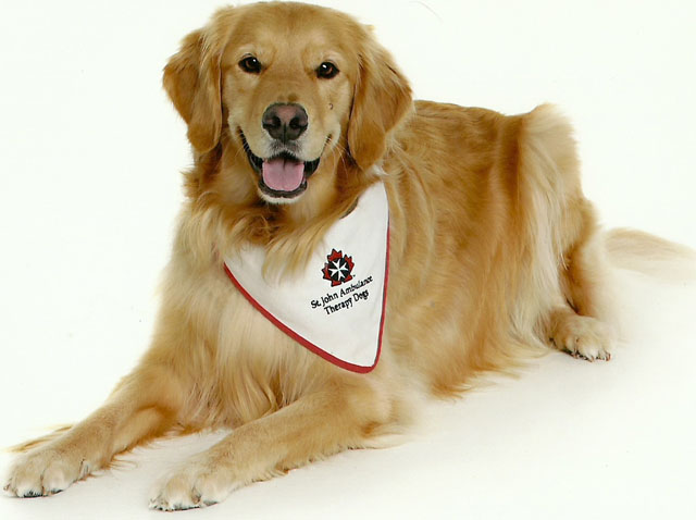 Therapy Dog image from http://westernreport.fims.uwo.ca/index.php/four-legged-volunteers-provide-canine-comfort/